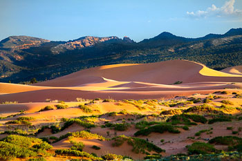 Coral Pink Sand Dunes Guided Tour